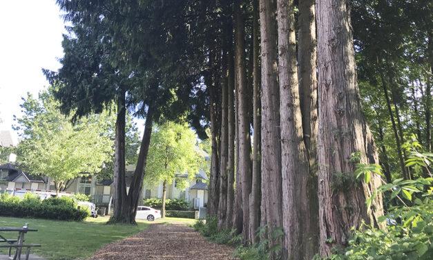 내 인생이란 나무에 거름이 되었던 일들
