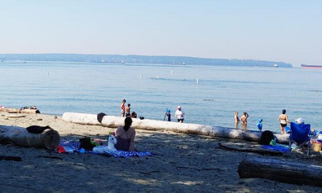 더위 탈출은 바로 여기서  메이플릿지 파크(Maple Ridge Park), 엠블사이드 해변(Ambleside Beach),  벨가드키친(Belgard Kitchen)